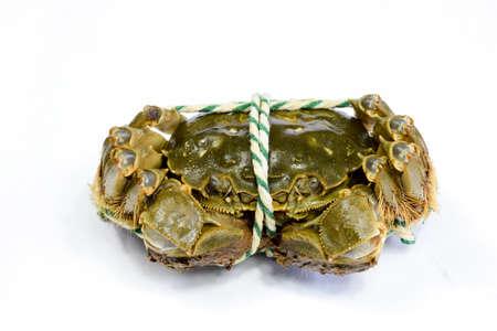 aquatic products: Lake crabs crabs close-up