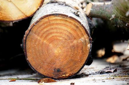 round: Round timber
