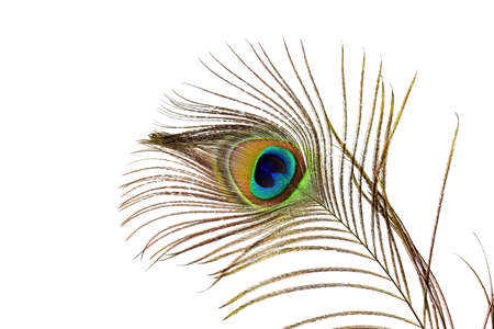 peacock feathers: Plumas del pavo real Primer Foto de archivo