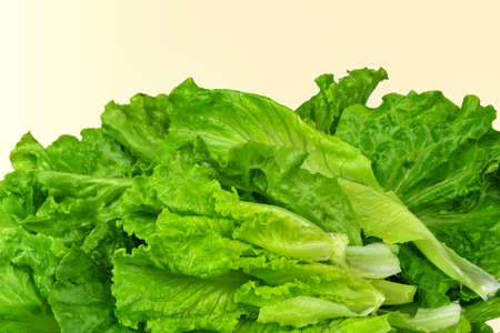 features: Lettuce features