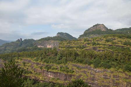 vegetation: Vegetation in Wuyi Mountain