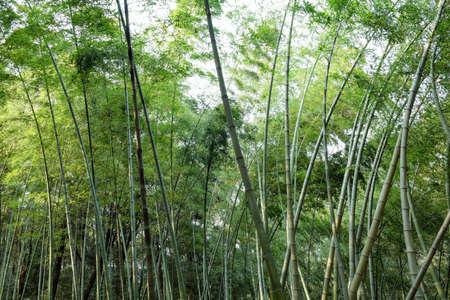 exemplary: Bamboo
