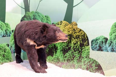 black bear: Black bear specimens Editorial