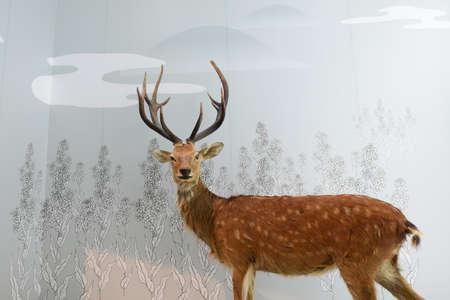 sika deer: Specimens of sika deer