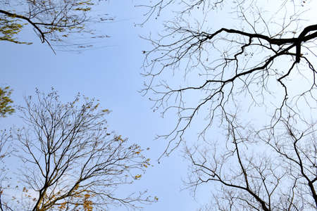 twigs: Winter twigs Stock Photo