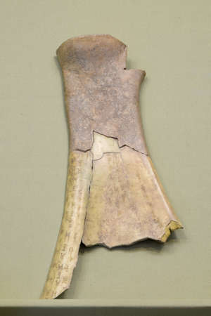 oracle: Cultural relics the Oracle bones