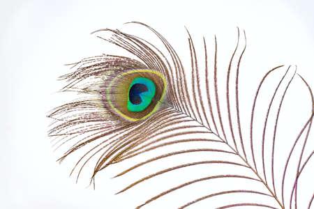 peacock feathers: Plumas de pavo real