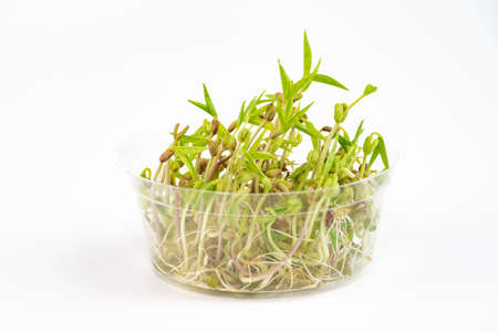 mung bean sprout: Bean sprout Stock Photo