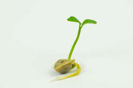 tenacious: Green shoots Stock Photo