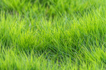 greening: meadow