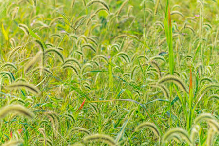 tail: The dogs tail grass Stock Photo