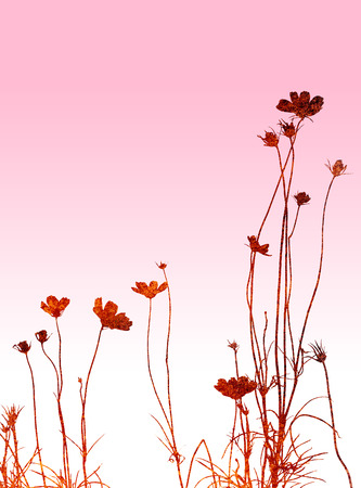 floral style textures Stock Photo - 1463416