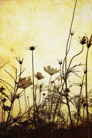 old-fashioned flower Stock Photo - 1694324