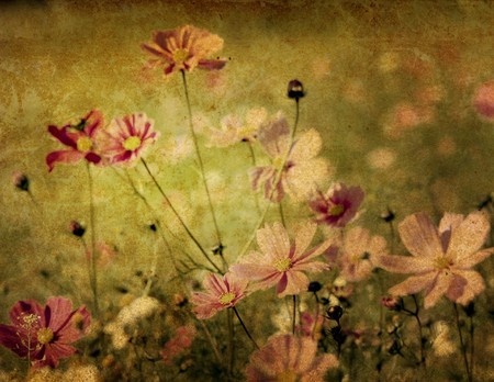 old-fashioned artistic flower Stock Photo
