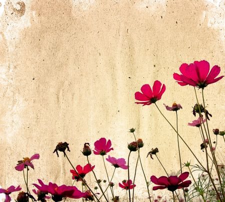 old-fashioned artistic flower  photo