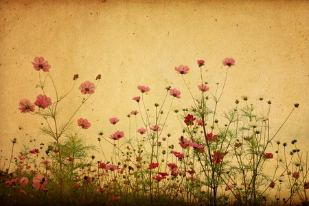 historic and vintage: vintage flower paper background  Stock Photo