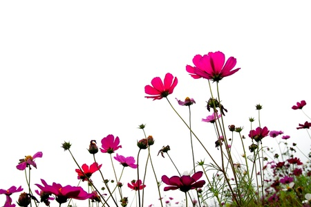 nurseries: red flower (Forest of Flowers )