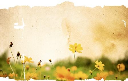 texturas de papel de viejo flor - fondo perfecto con espacio