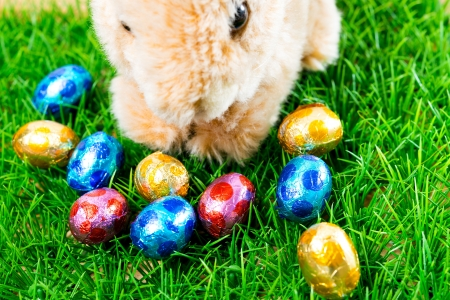 Little Easter rabbit on spring green grass Stock Photo - 17872631
