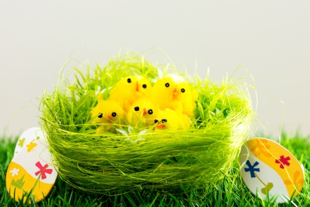 Easter eggs and chickens on green grass photo