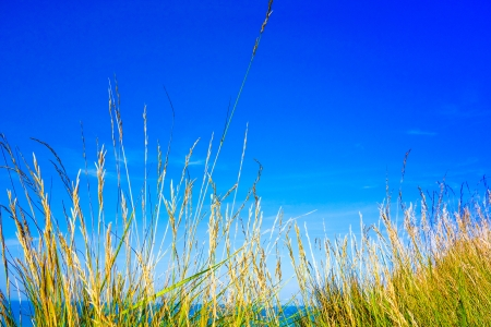 Green grass,green field with light photo