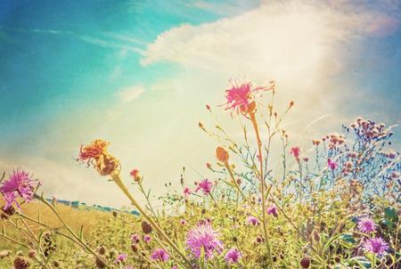 nurseries: beautiful view in summer flower (Forest of Flowers )