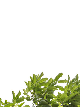 a leaf photo