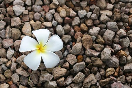 a white plumeria flower on rocks floor background
