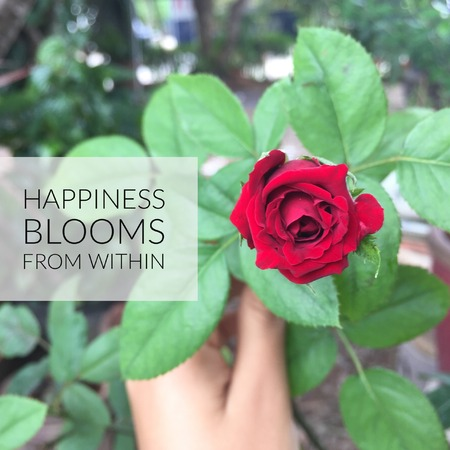 Inspirational motivational quote Happiness blooms from within. On red rose background.