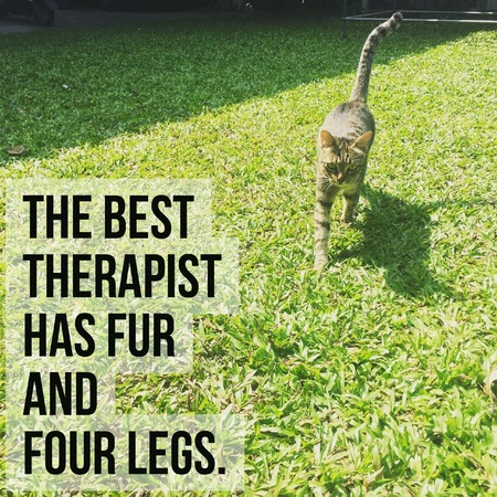 Inspirational motivational quote the best therapist has fur and four legs.