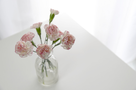Top view of pink and white carnation flowers vase on white table in white room. Flat lay.