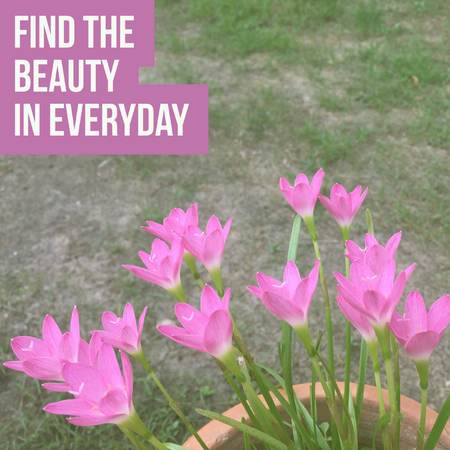 Inspirational motivational quote find the beauty in everyday. with pink flowers background.