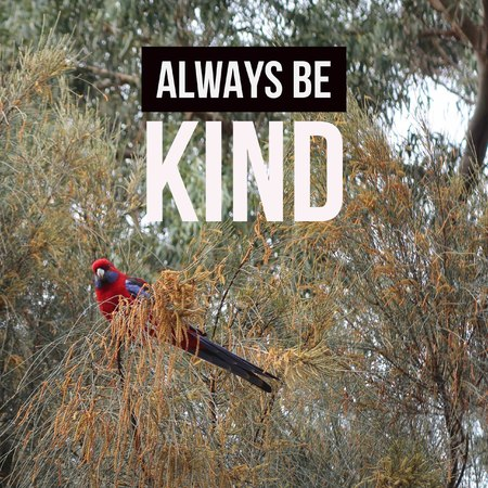 Inspirational motivational quote always be kind. with a parrot background.