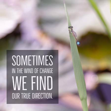 Inspirational motivational quote Sometimes in the wind of change we find our true direction. with dragonfly background.