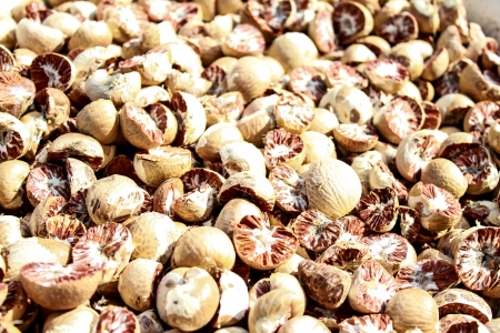 betel nut,south of thailand,nuts drying makes for chewing it a popular habit in Asian photo