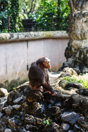 monkey sitting on a rock at the zoo  Stock Photo