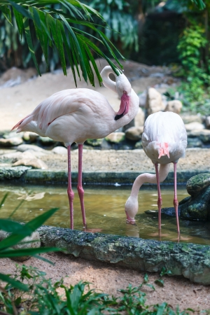 flamingo in zoo photo