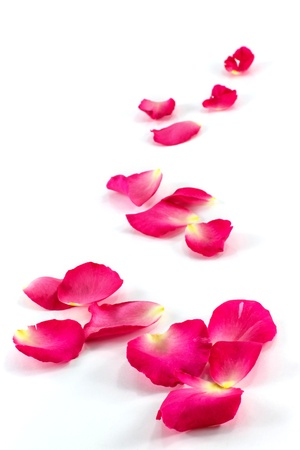 rose petals: Beautiful rose petals on a white background Stock Photo