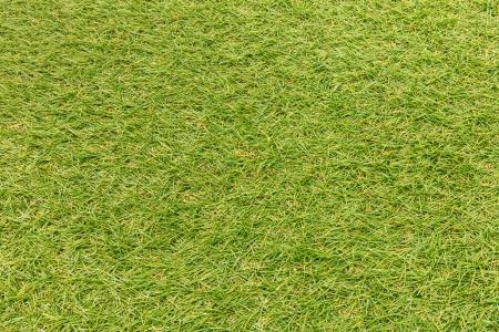 reen Grass texture photo