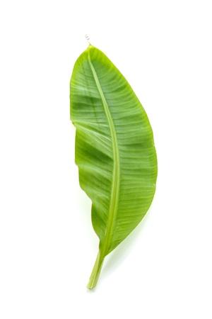 banana leaf: Young banana leaf on white background  Stock Photo