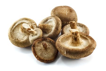 fresh mushroom champignon isolated on white background photo