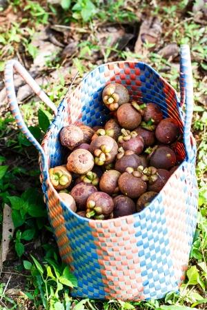 Frutas tropicais, mangost Banco de Imagens