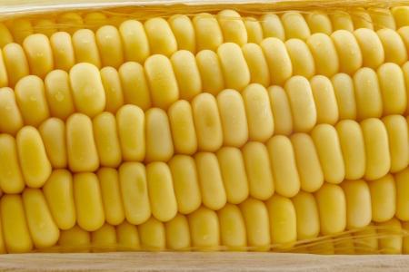 ripe yellow corn closeup as background Banco de Imagens