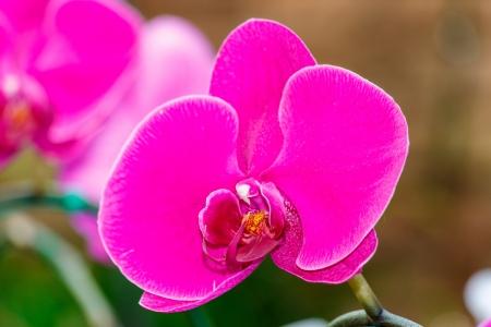 violet orchid arrangement centerpiece