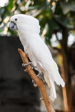 Pink and white cockatiel bird