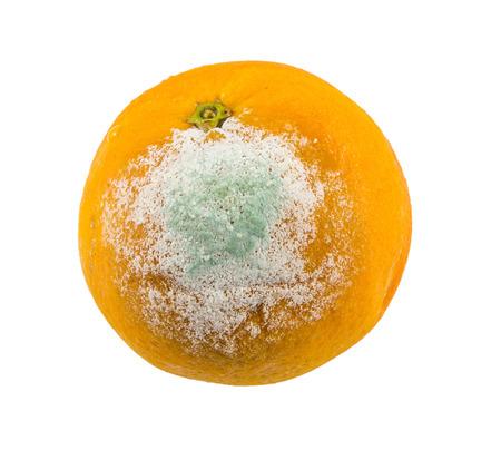 spoilage: rotten orange on white background Stock Photo