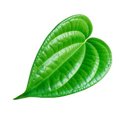 Shaped green betel leaf heart shape isolated on white background