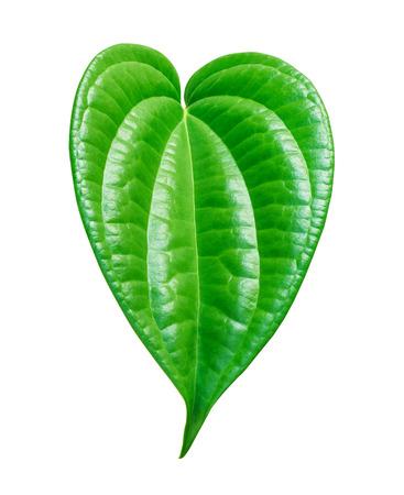 Cora��o forma folha de betel verde em forma isolada no fundo branco Banco de Imagens