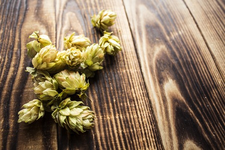 a dried hops for beer on wooden background