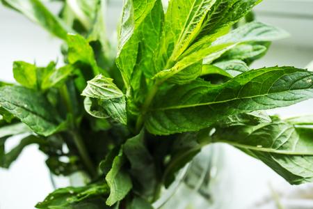 mentha: fresh green mint on white background spring Stock Photo